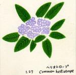 Flower127