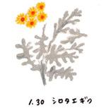 Flower131