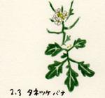 Flower203