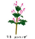 Flower208
