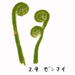 Flower29750