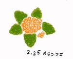 Flower225